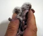 finger_monkeys_12[1].jpg