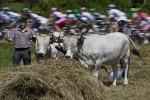 1367008-cycling-fra-tdf2013-postcard-pack.jpg