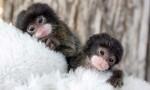 finger_monkeys_14[1].jpg