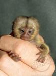 finger_monkeys_16[1].jpg