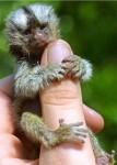 finger_monkeys_10[1].jpg