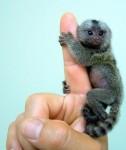finger_monkeys_03[1].jpg