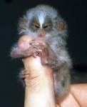 finger_monkeys_13[1].jpg